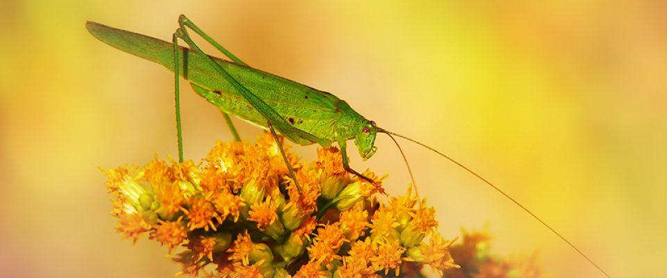 insetti, Novel food